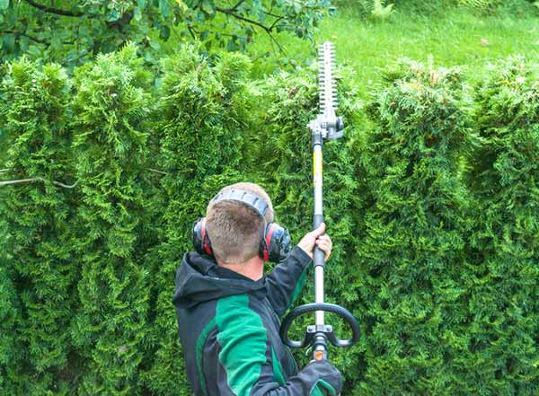 hedge pruning vancouver
