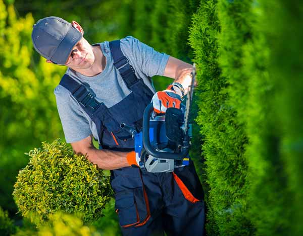 Hedge Trimming Vancouver